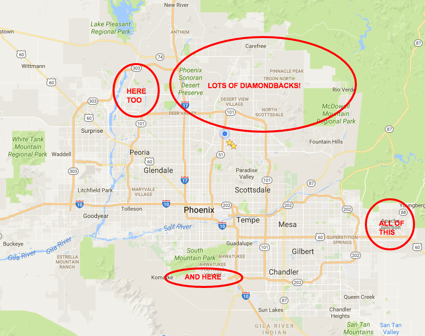 where in phoenix has the most rattlesnakes