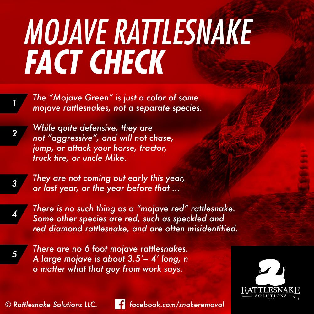 mohave rattlesnake facts rattlesnake solutions