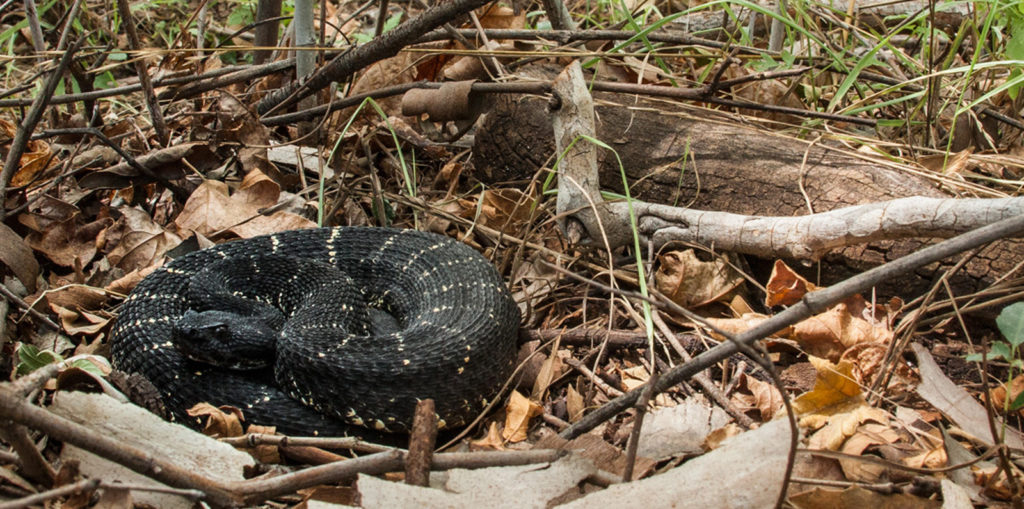 Hello Prescott! Rattlesnake Solutions now offers snake removal and