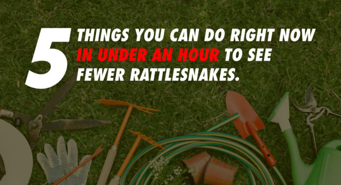 keep rattlesnakes away
