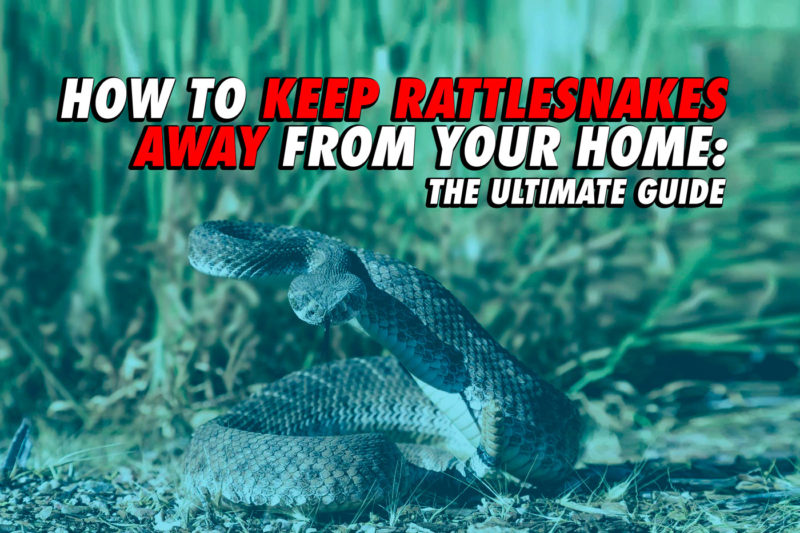 what keeps snakes away from homes